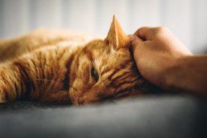 ¿Qué es la piómetra? ¿Cómo puede afectar a mi gata?