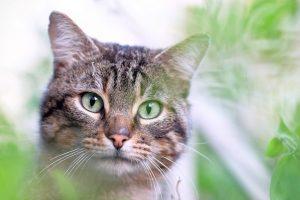 Mi gato tiene pulgas… ¿cuáles son tratamientos más comunes?