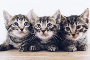 ¿Cómo cuidar a una gata y a sus crías?