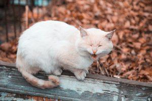 Antinflamatorios naturales para gatos