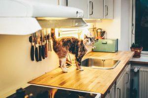 Vinagre para gatos, ¿Es peligroso?