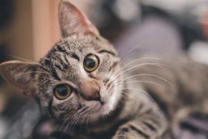¿Cómo hacer que tu gato sea más cariñoso?