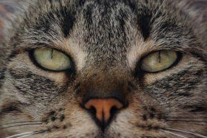 ¿Cómo amansar gatos ariscos?