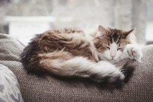 Consejos para tratar el pelo apelmazado de tu gato