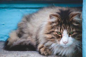 Señales de que tu gato te odia