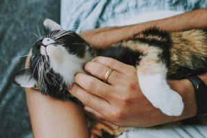 ¿Por qué mi gato no se deja acariciar?