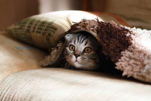 Mi gato es asustadizo ¿Por qué? ¿Qué debo hacer?
