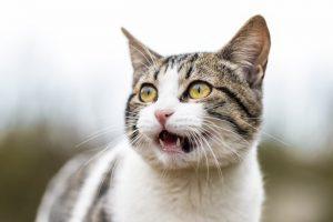 Mi gato respira muy rápido ¿Debo preocuparme?