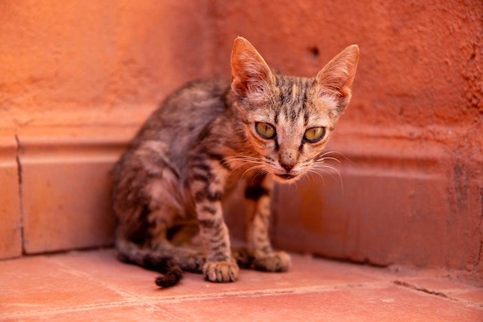 Mi gato está muy delgado ¿Qué le ocurre? ¿Qué puedo hacer?