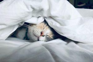 Las 7 cosas que más les gustan a los gatos
