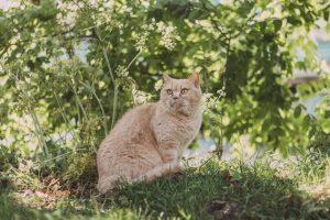Los mejores remedios caseros para las pulgas en gatos