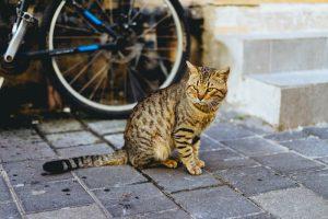 ¿Los gatos saben volver a casa? ¿Cómo lo hacen?