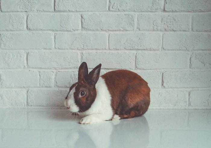 ¿Pueden convivir gatos y conejos?