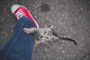 ¿Por qué mi gato me muerde las piernas?