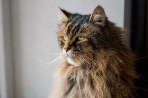 Â¿Realmente tienen memoria los gatos?