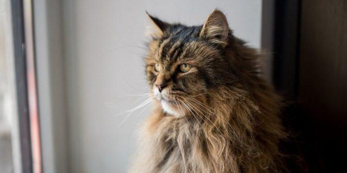 ¿Realmente tienen memoria los gatos?