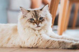 Mi gato hace ruidos cuando respira, Â¿es normal?